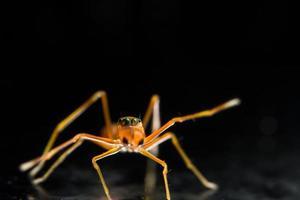 il ragno cammina verso lo spettatore foto