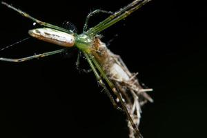 macro ragno su foglia