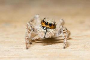 macro ragno su legno