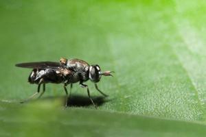 stretta di mosca della frutta foto