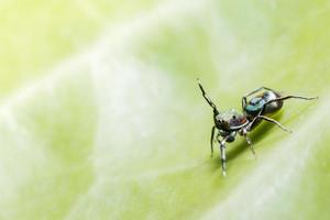 ragno su foglia verde