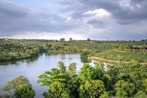 alberi che si affacciano sul fiume foto