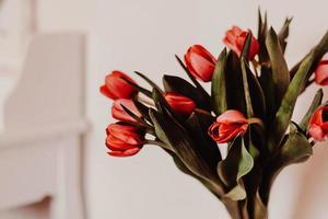 tulipani rossi in vaso