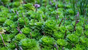pianta a foglie verdi foto