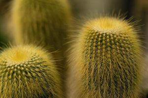 pianta di cactus verde