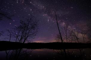 alberi sotto il cielo notturno stellato