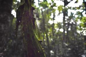 albero con funghi foto
