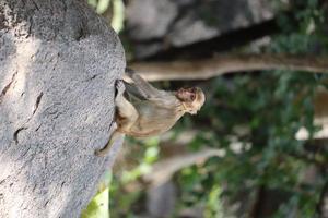 scimmia seduta su una roccia