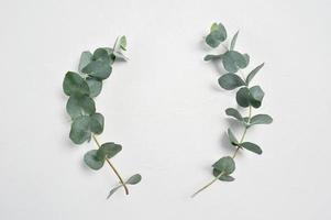 foglie di eucalipto sugli steli foto