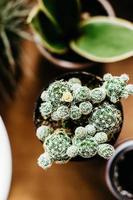 cactus in primo piano vista foto