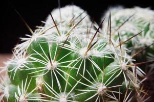alto vicino del cactus