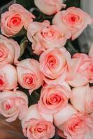 primo piano di rose rosa