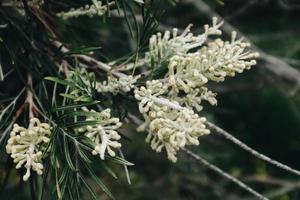 fiore bianco petalo foto