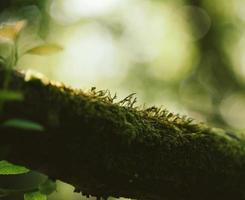 muschio sul ramo di un albero