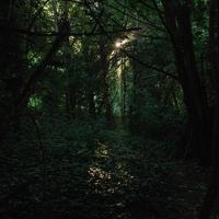 alberi verdi sulla foresta