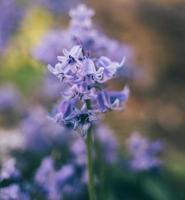 dettaglio fiore viola foto