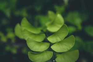 pianta a foglia verde foto