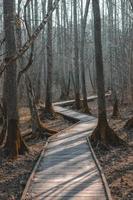 pista vuota nella foresta foto