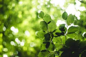 piante a foglia verde foto