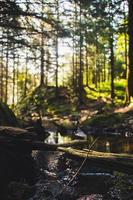 foresta durante il giorno