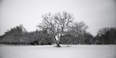 foto in scala di grigi dell'albero