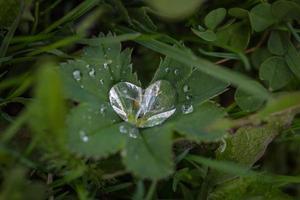 pianta a foglia verde