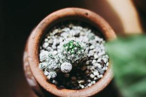 vaso di cactus, vista dall'alto foto