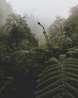 pianta di felce verde foto