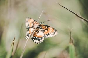 farfalla marrone bianca e nera sulla pianta