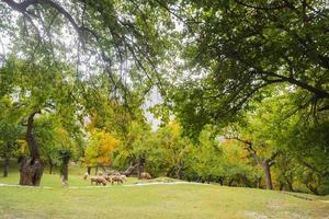 vista del paesaggio della natura del giardino del parco foto