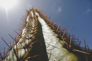 cactus contro il cielo blu chiaro foto