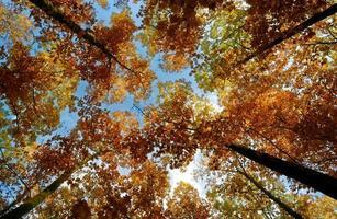 alberi in una foresta d'autunno