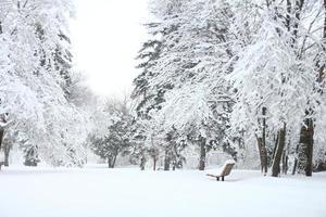 abeti coperti di neve