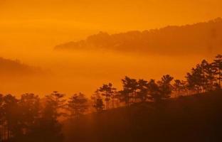 alberi e colline nella nebbia