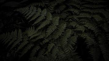 pianta di felce verde