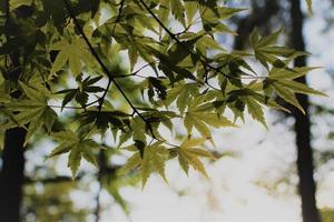primo piano delle foglie verdi in cielo foto