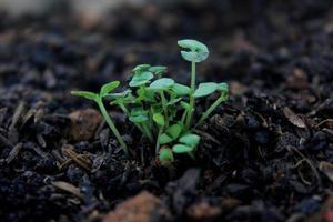 Chiuda in su della pianta verde