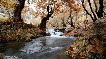 fiume all'interno della foresta foto