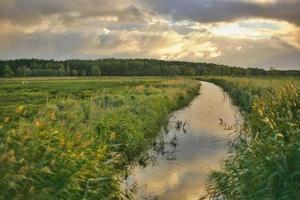 campo erboso verde con flusso