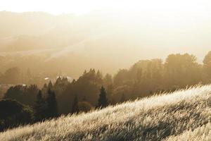 campo di erba marrone vicino alberi verdi foto