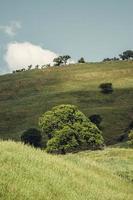 campo erboso verde foto