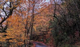 strada tra alberi foto
