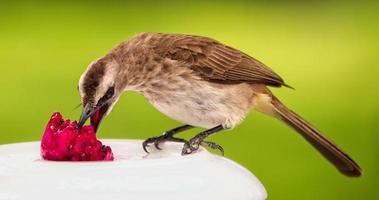 uccello marrone che mangia frutta
