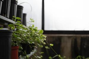 pianta verde in vaso