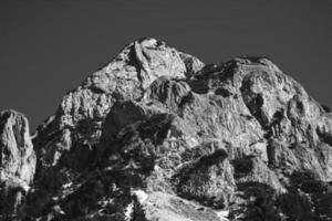 foto in bianco e nero di alberi e montagna