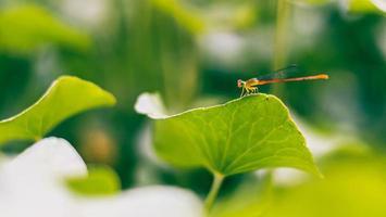 libellula su foglie verdi