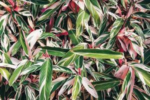 fondo tropicale della pianta della foglia della natura foto