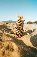 pigna nella sabbia in spiaggia foto