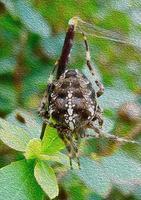 illustrazione del ragno foto