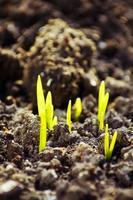 vista macro del germoglio che cresce dal seme, concetto di primavera foto